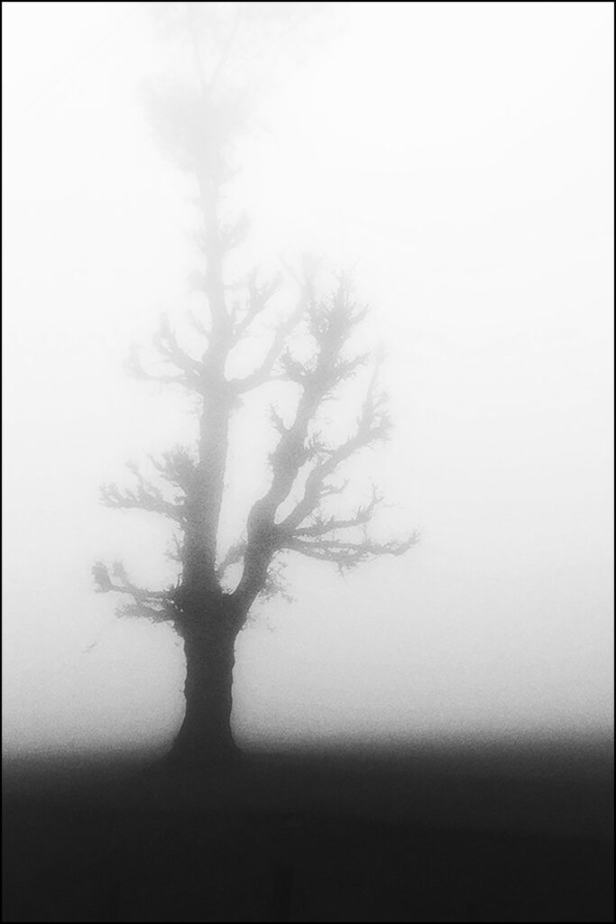 Rooted_01-1